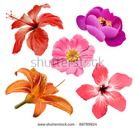 Free pictures of exotic flowers image freeuse stock Tropical Flowers Stock Images, Royalty-Free Images & Vectors ... image freeuse stock