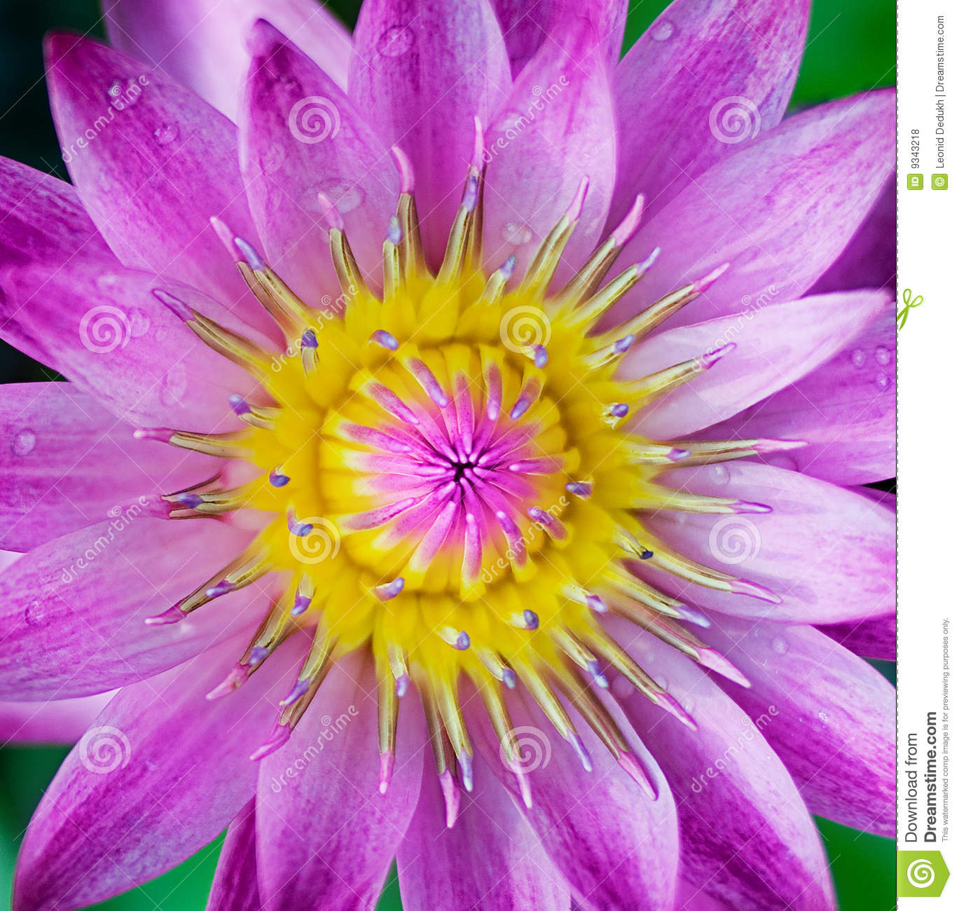 Free pictures of exotic flowers clipart transparent Purple Exotic Flower Stock Photos, Images, & Pictures - 15,502 Images clipart transparent