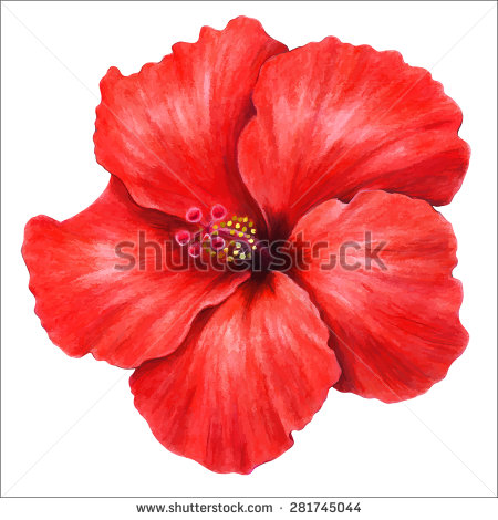 Free pictures of hibiscus flowers png transparent library Hibiscus Flower Stock Images, Royalty-Free Images & Vectors ... png transparent library