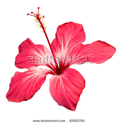 Free pictures of hibiscus flowers png royalty free stock Hibiscus Flower Stock Images, Royalty-Free Images & Vectors ... png royalty free stock