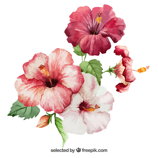 Free pictures of hibiscus flowers royalty free library Watercolor hibiscus flowers Vector | Free Download royalty free library
