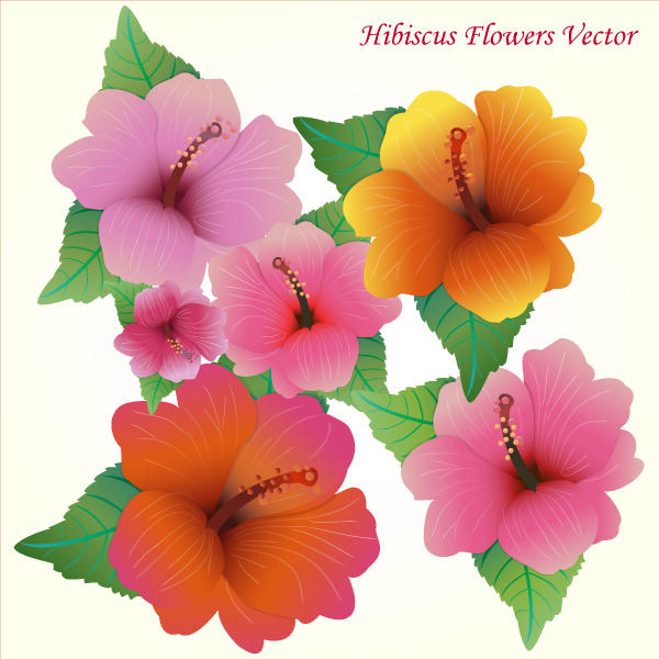 Free pictures of hibiscus flowers jpg library download Hibiscus Flowers Vector Art Free | 123Freevectors jpg library download