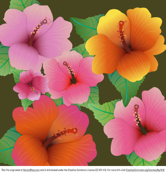 Free pictures of hibiscus flowers png transparent stock Hibiscus Flowers - Free Vector Art png transparent stock