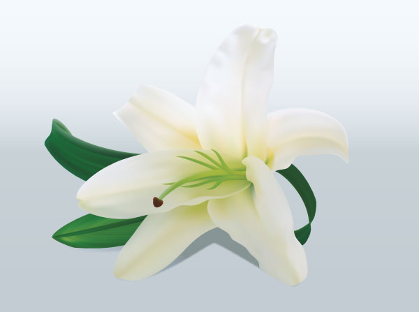 Free pictures of lily flowers graphic freeuse stock Lily Flower | Download Free Vector Art | Free-Vectors graphic freeuse stock