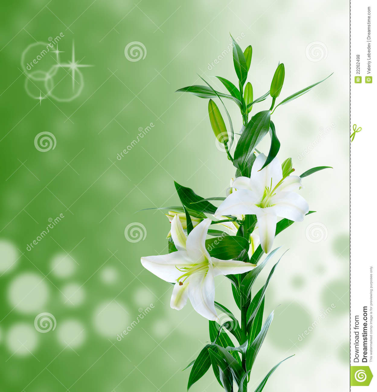 Free pictures of lily flowers picture black and white download Beautiful White Lily Flowers Royalty Free Stock Photos - Image ... picture black and white download