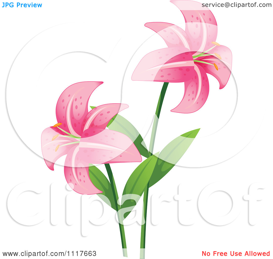 Free pictures of lily flowers svg download Lily flower pictures free - ClipartFest svg download