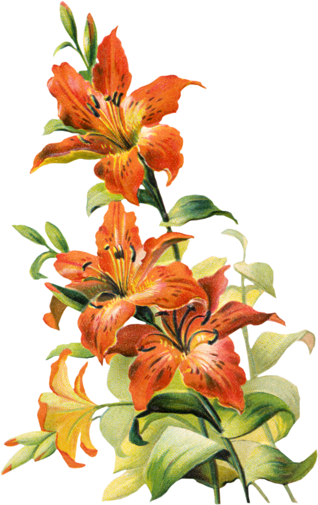 Cross and lily clipart banner transparent download Best ideas about Teal Tiger, Tiger Lilys and Tiger Lily Flowers on ... banner transparent download