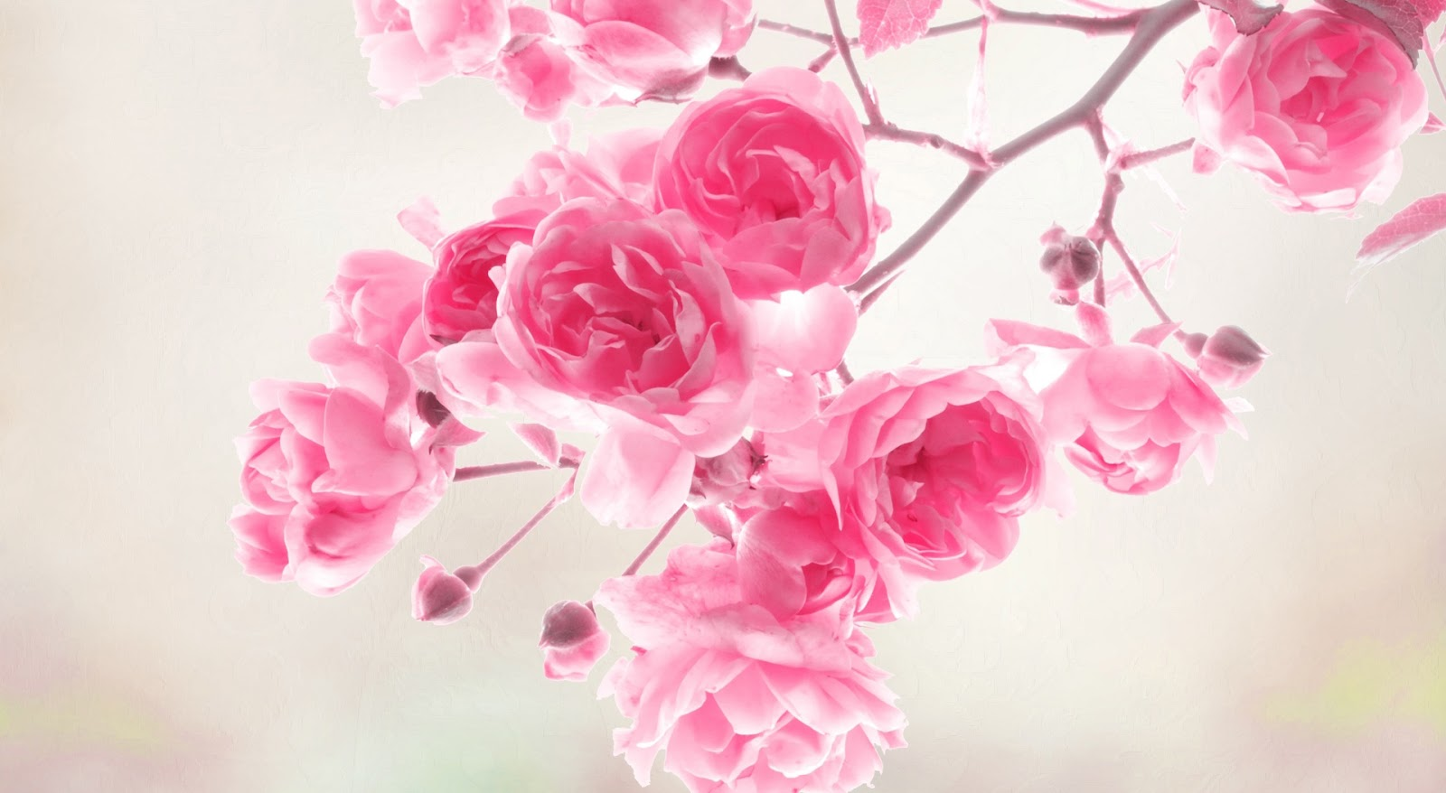 Free pictures of pink flowers image download Wallpaper Pink Flowers image download