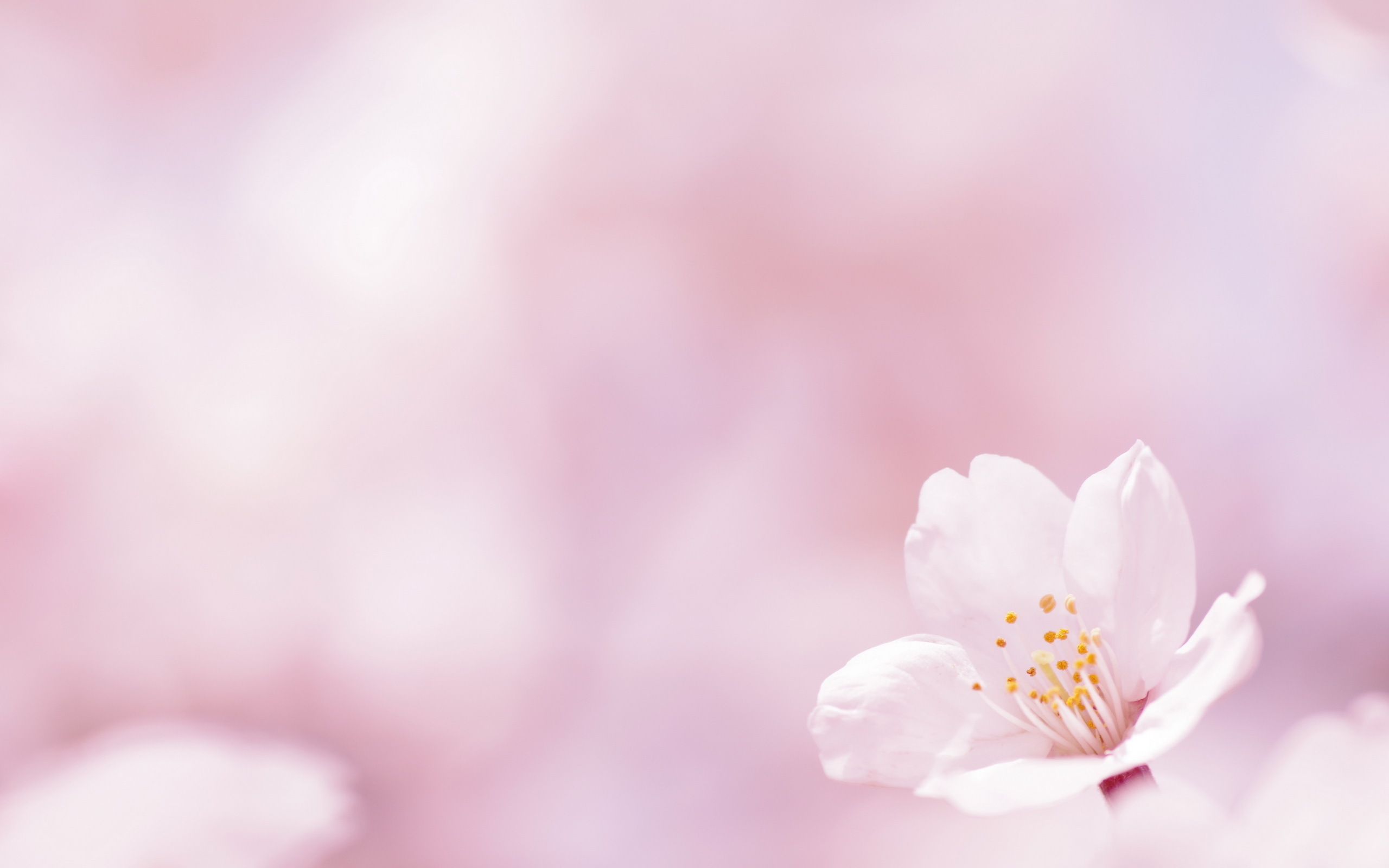 Free pictures of pink flowers clip transparent download 39 units of Pink Flowers Wallpaper clip transparent download
