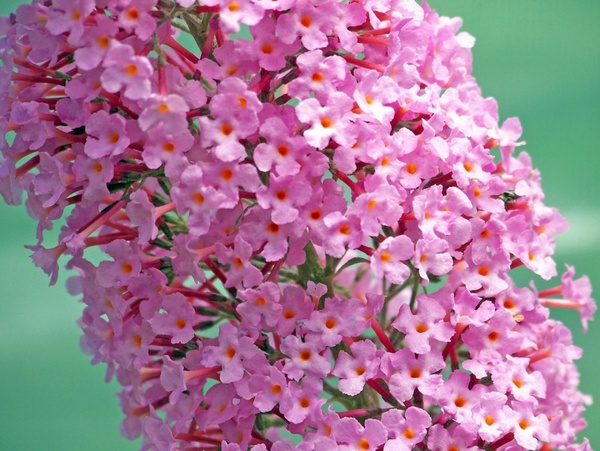 Free pictures of pink flowers png transparent download Pink flower images free stock photos download (11,835 Free stock ... png transparent download
