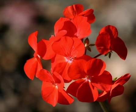 Free pictures of red flowers vector library Red flowers free stock photos download (15,593 Free stock photos ... vector library