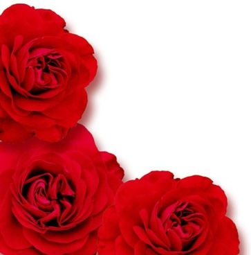 Free pictures of red flowers