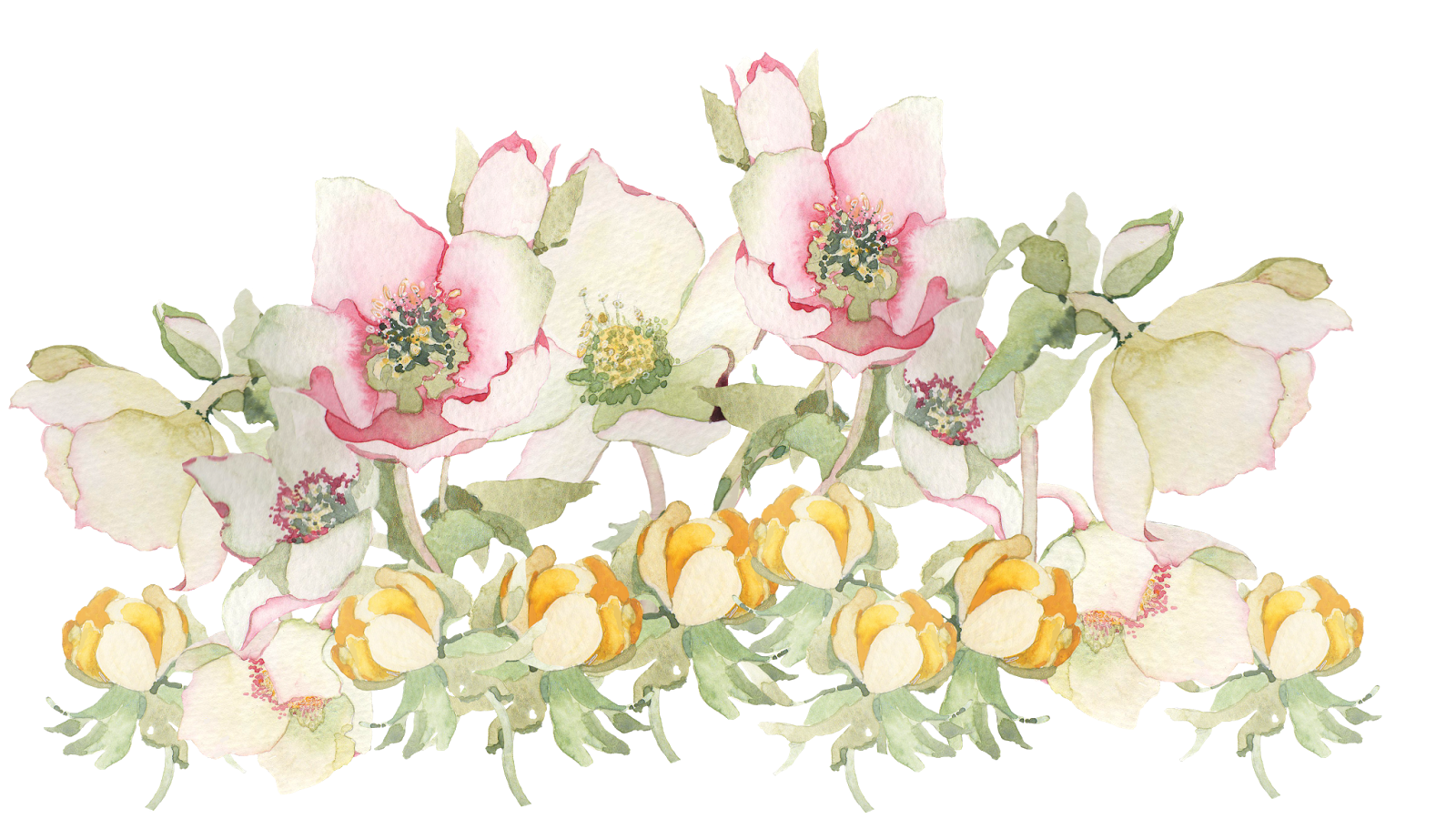 Free pictures of spring flowers freeuse stock Spring Flowers Png #43168 - Free Icons and PNG Backgrounds freeuse stock