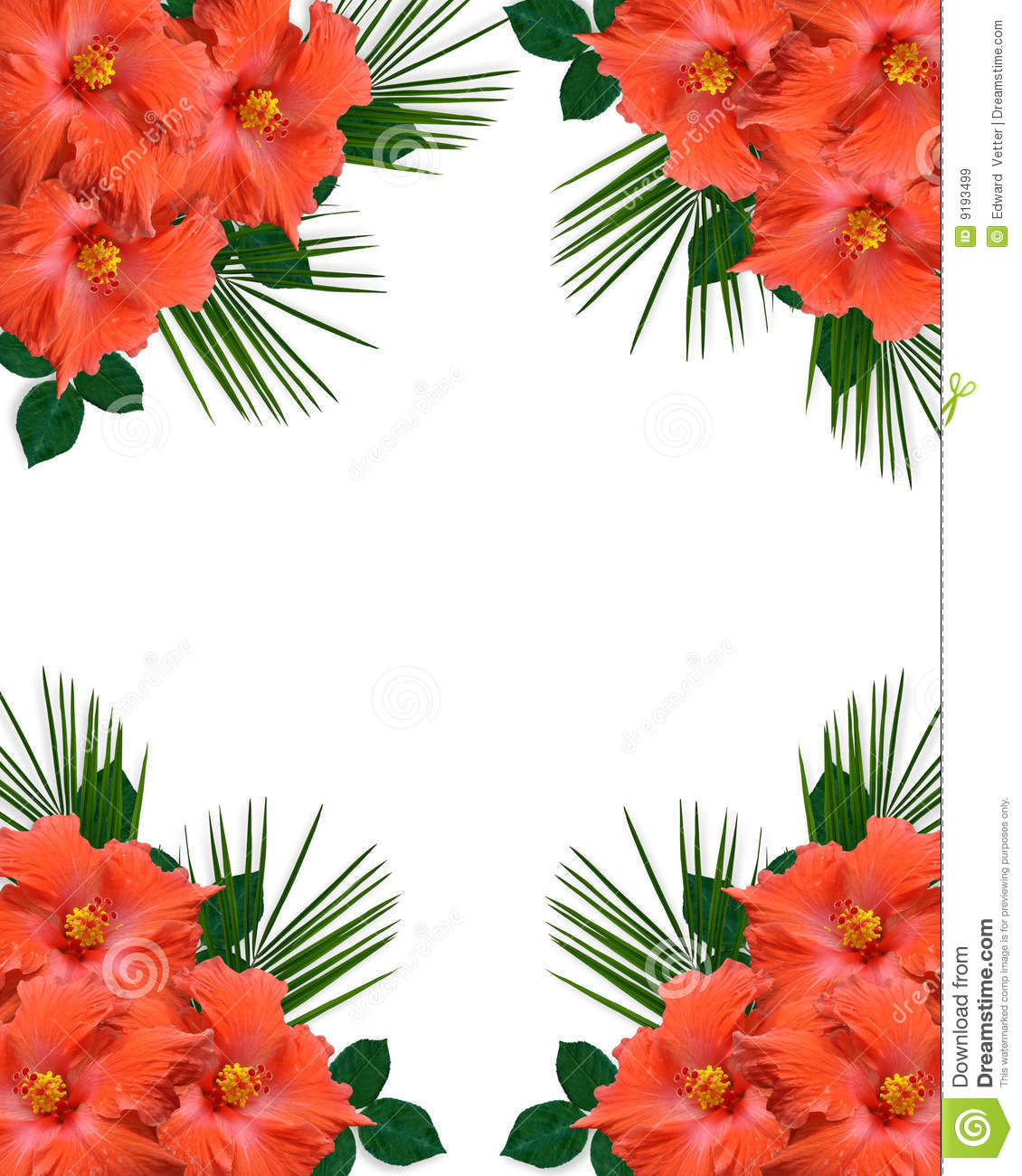 Free pictures of tropical flowers clip art transparent Hibiscus Tropical Flowers Border Royalty Free Stock Images - Image ... clip art transparent