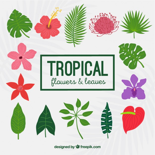 Free pictures of tropical flowers image transparent Tropical flowers and leaves Vector | Free Download image transparent