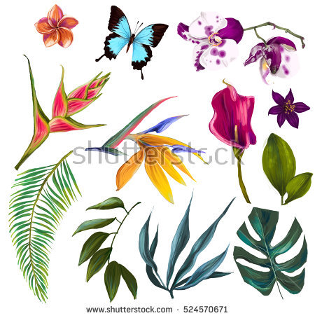 Free pictures of tropical flowers png library Tropical Flowers Stock Images, Royalty-Free Images & Vectors ... png library
