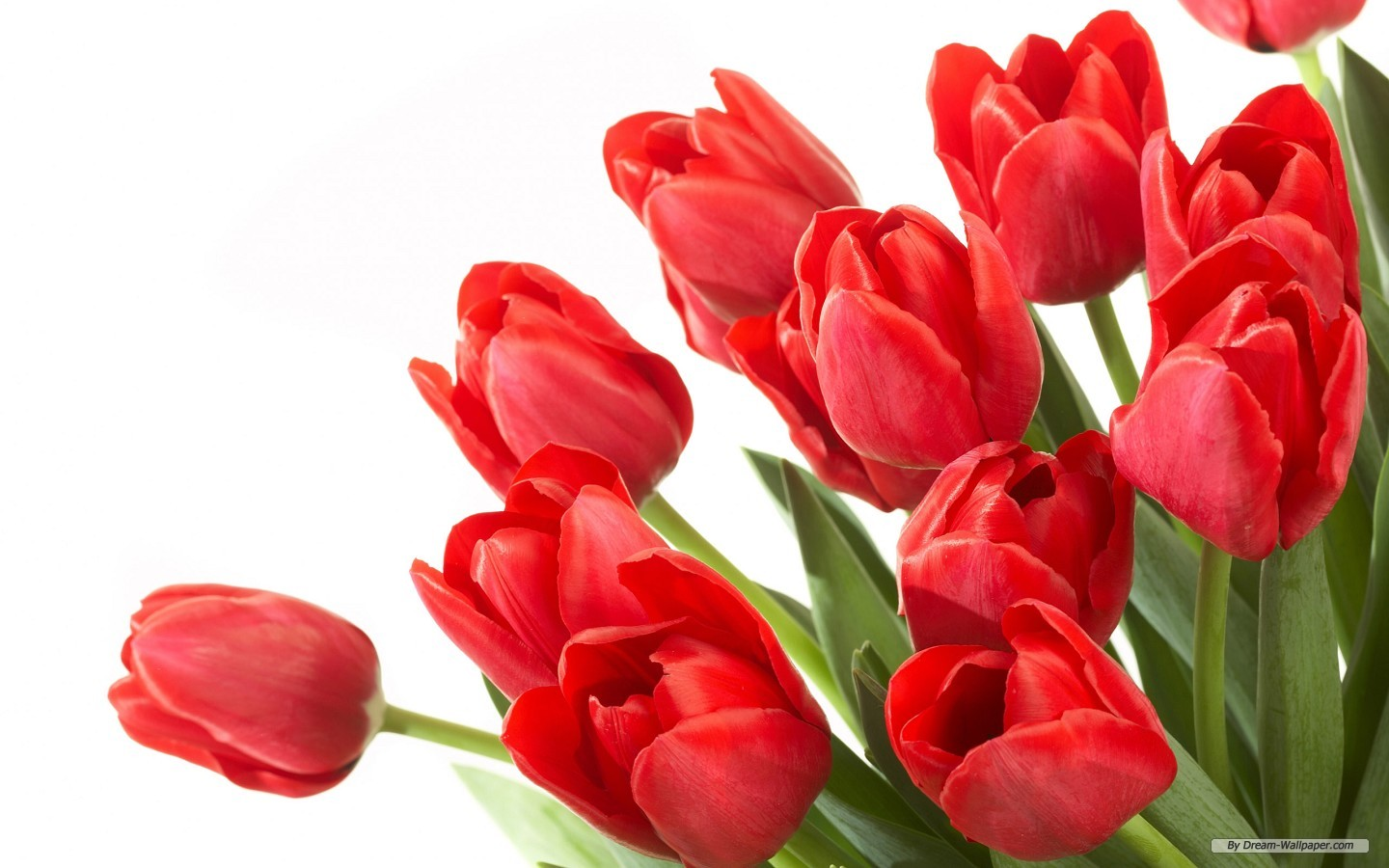 Free pictures of tulips flowers clip Free Wallpaper Tulips, Tulips Full 100% Quality HD Quality ... clip