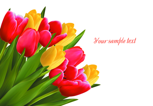Free pictures of tulips flowers picture Tulip pics free - ClipartFest picture