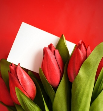 Free pictures of tulips flowers graphic stock Free tulip flower images free stock photos download (10,980 Free ... graphic stock