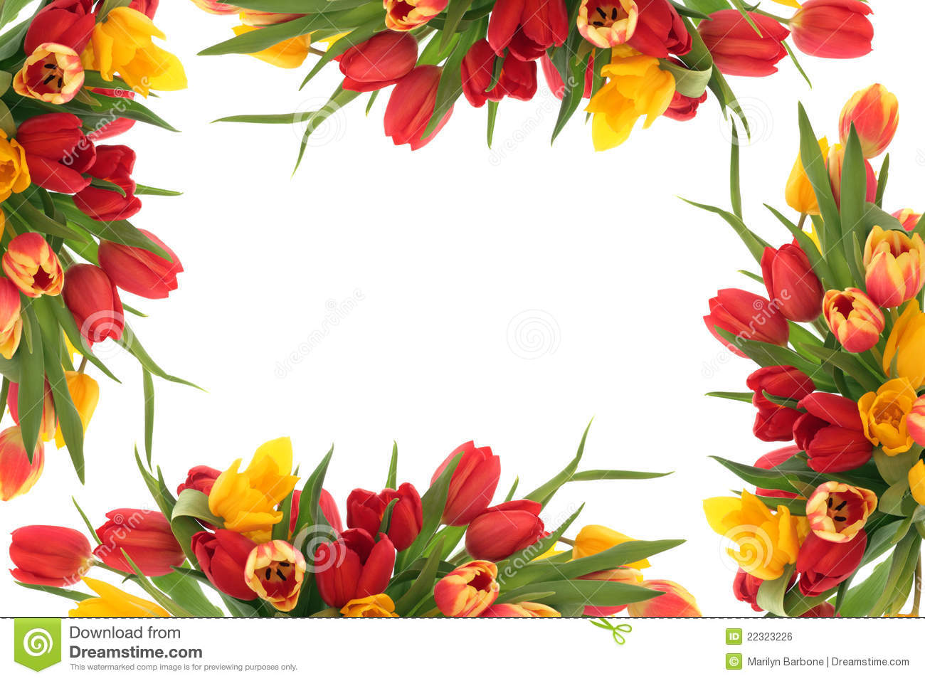 Free pictures of tulips flowers picture transparent library Tulip Flower Border Royalty Free Stock Image - Image: 22323226 picture transparent library
