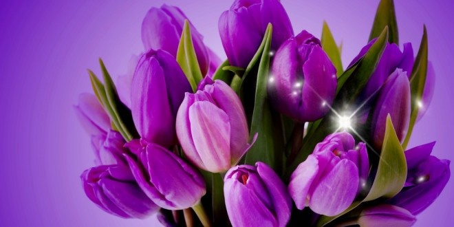 Free pictures of tulips flowers clip freeuse download Tulip flower free download in high definition resolution for ... clip freeuse download
