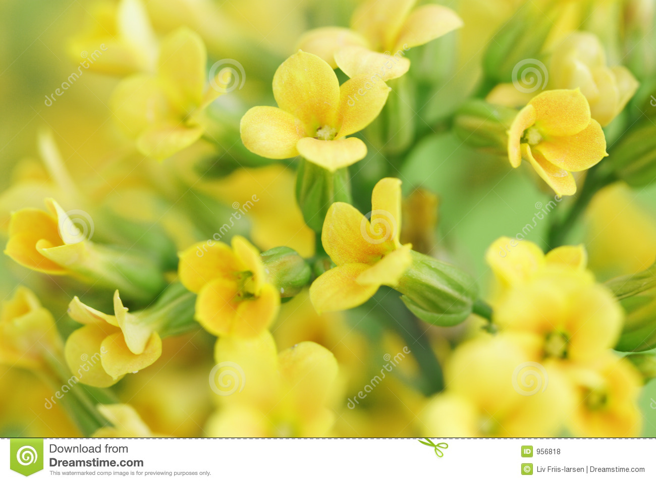 Free pictures of yellow flowers clip art free download Yellow Flowers Stock Photos, Images, & Pictures - 325,509 Images clip art free download