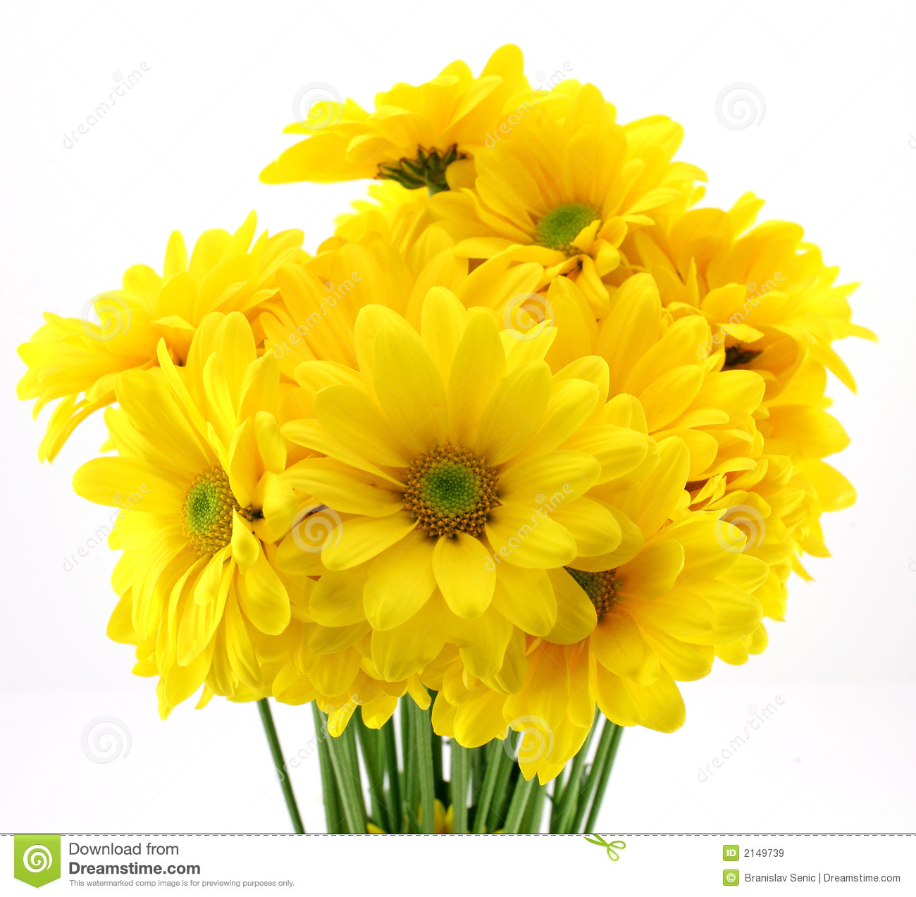 Free pictures of yellow flowers vector free yellow flowers images vector free