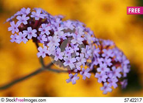 Free pictures of yellow flowers jpg royalty free download Purple And Yellow Flowers - Free Stock Photos & Images - 5742217 ... jpg royalty free download