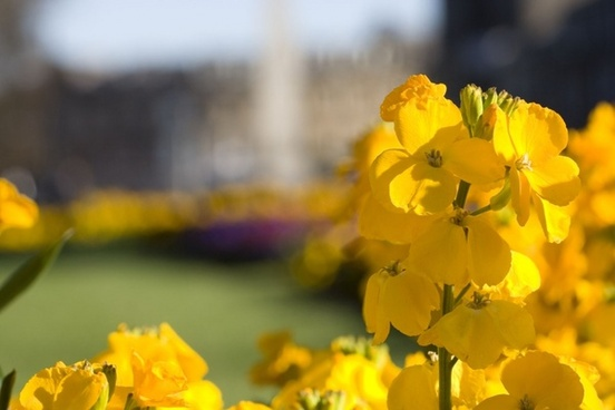 Free pictures of yellow flowers png freeuse stock Yellow flower picture free stock photos download (13,135 Free ... png freeuse stock