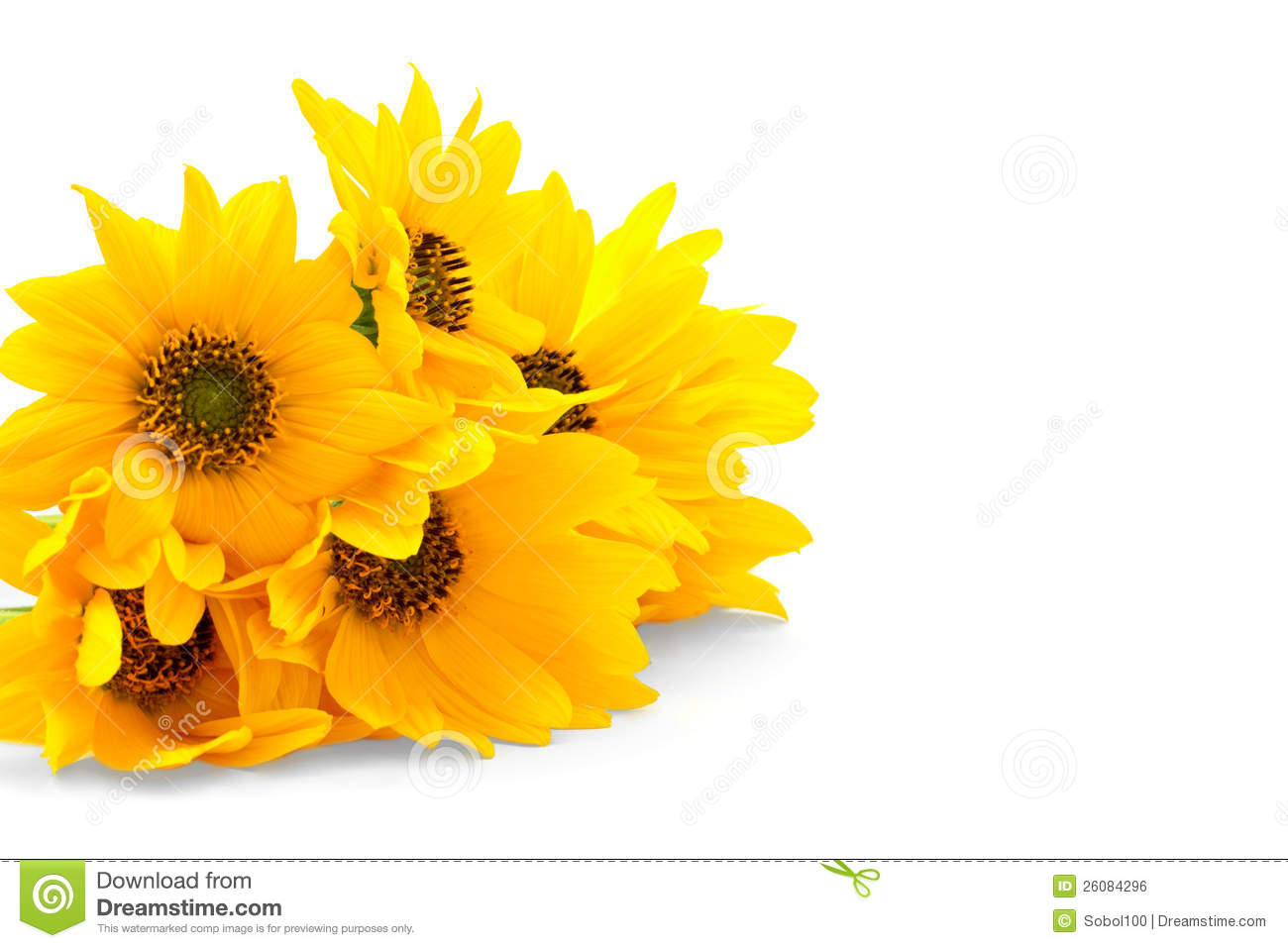 Free pictures of yellow flowers graphic library download Fresh Yellow Flowers On White Background Royalty Free Stock Image ... graphic library download