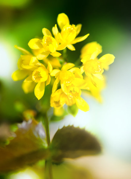 Free pictures of yellow flowers library Free stock photos - Rgbstock -Free stock images | Yellow flowers ... library