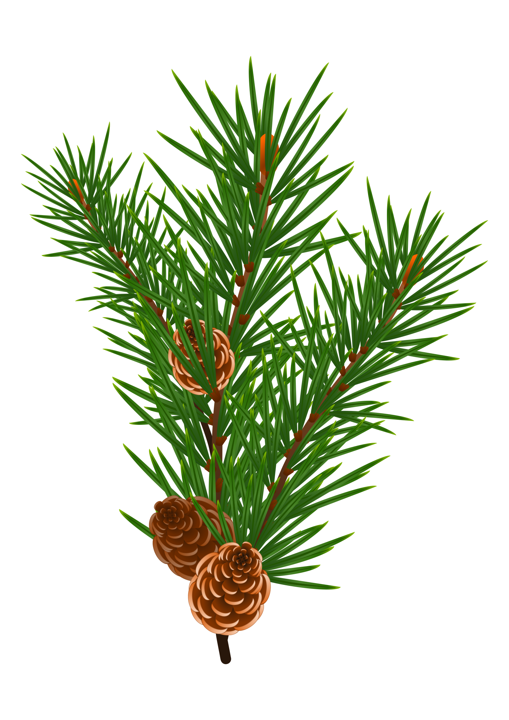 Pine branches clipart clip art transparent library Pine Branch with Pine Cones Vector Clipart image - Free stock photo ... clip art transparent library