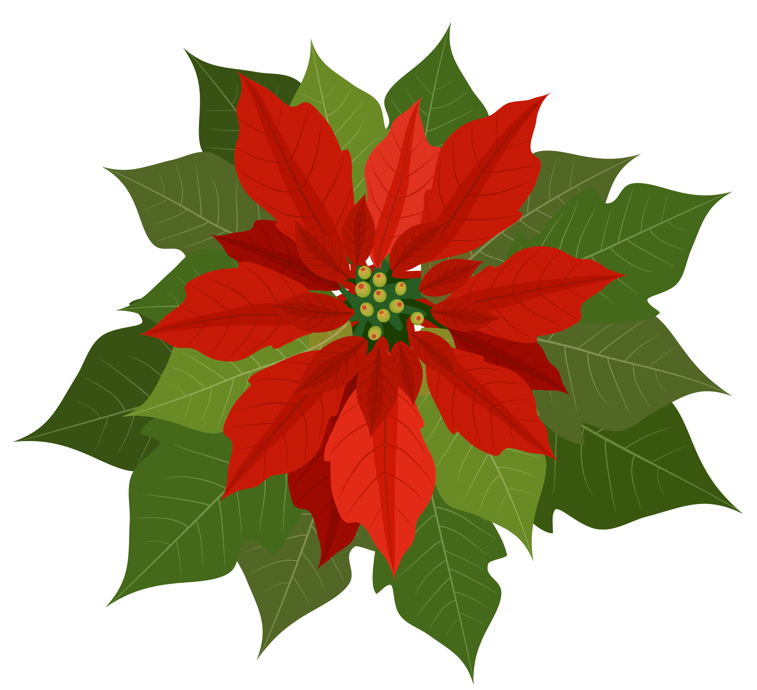 Free poinsettia clipart images. Poinsettias cliparts download clip