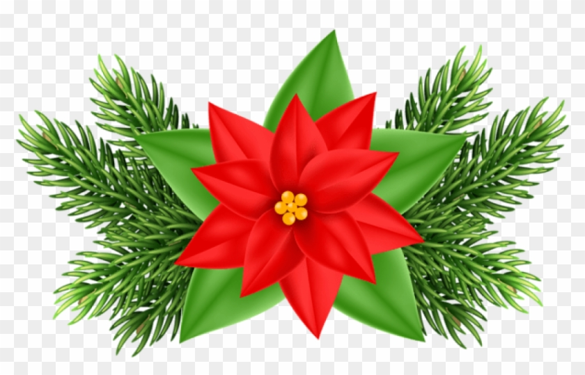 Free poinsettia clipart images. Png christmas deco transparent