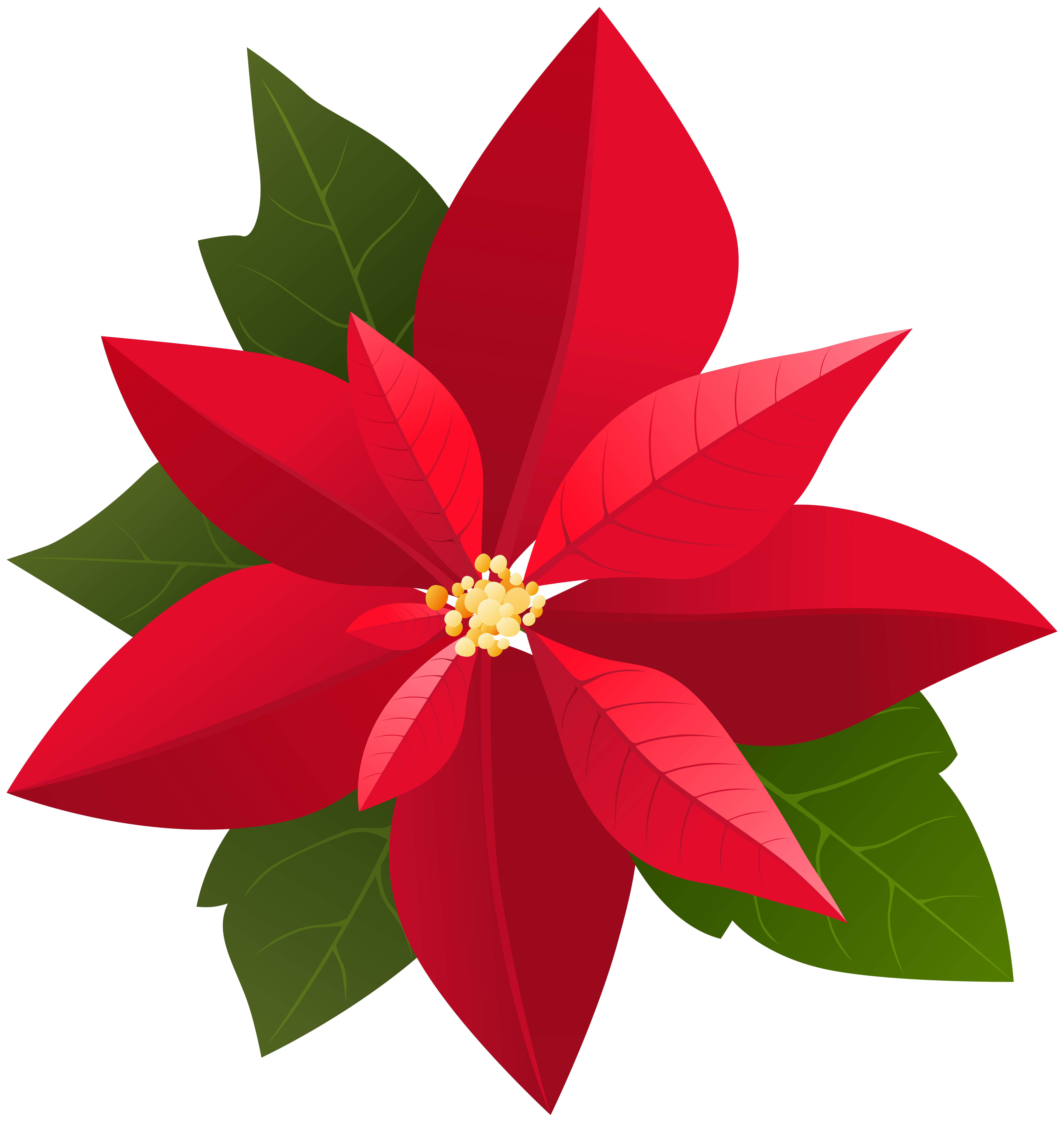 Free poinsettia clipart images. Christmas png clip art