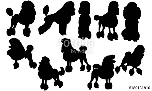 Free poodle silhouette clipart. Dog vector graphics stock