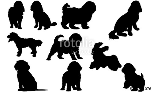 Free poodle silhouette clipart. Cockapoo dog svg files