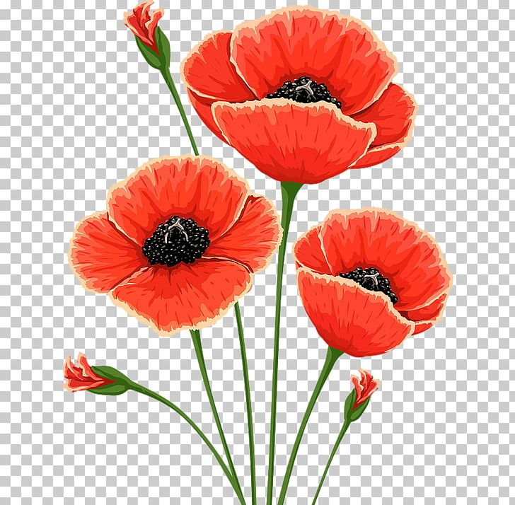Free poppy flower clipart banner royalty free library Common Poppy Flower Remembrance Poppy Poppies PNG, Clipart, Common ... banner royalty free library