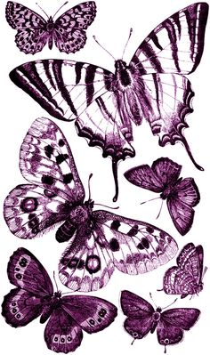Free printable butterfly clipart jpg freeuse Crafts, Shopping and Free printables on Pinterest jpg freeuse