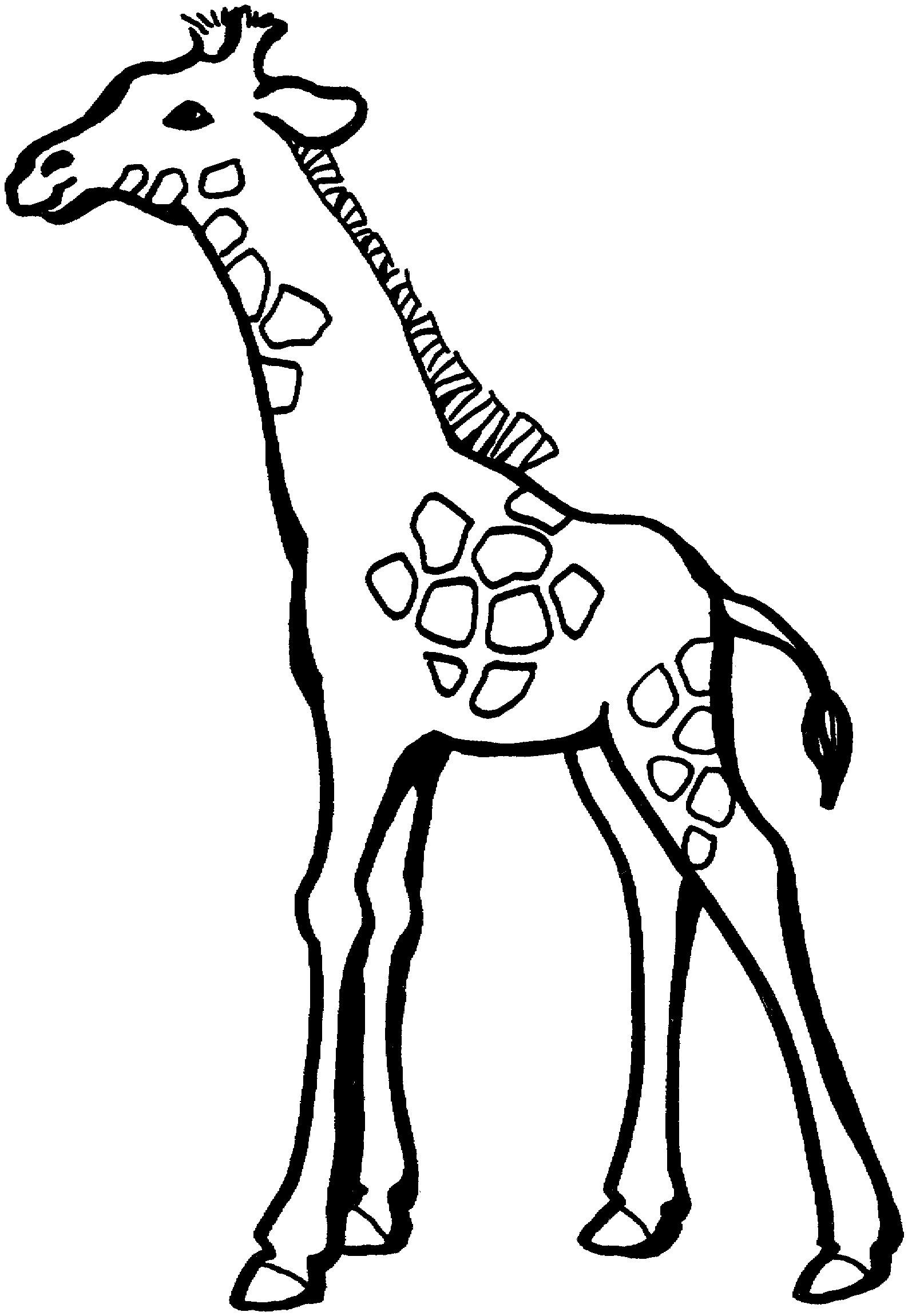 Free printables giraffe in plane clipart image library library Giraffe Coloring Page. giraffe colouring page. giraffes coloring ... image library library