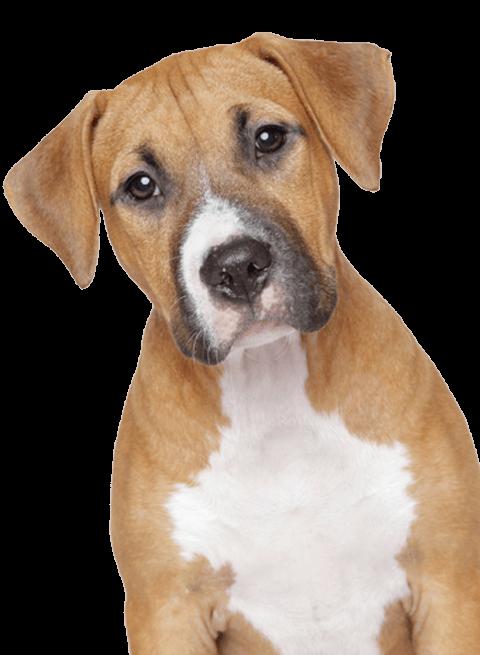 Free sad dog clipart svg free Sad Dog transparent PNG - StickPNG svg free