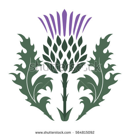Thistle clipart images png royalty free library Scottish thistle clipart 7 » Clipart Station png royalty free library