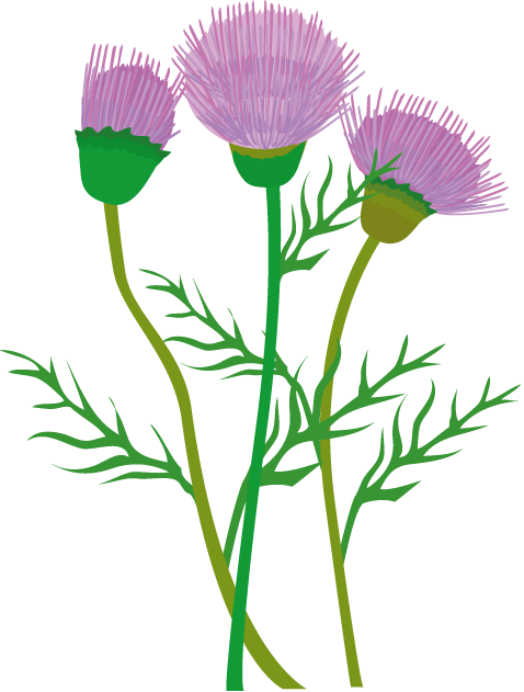 Thistle clipart free clipart library download Free Thistle Cliparts, Download Free Clip Art, Free Clip Art on ... clipart library download