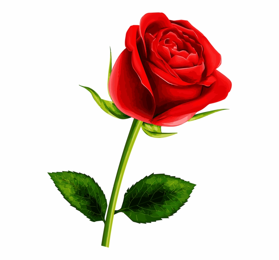 Soledad Red Flowers, Pretty Flowers, Red Roses, Single - Rose Flower ... clipart royalty free library