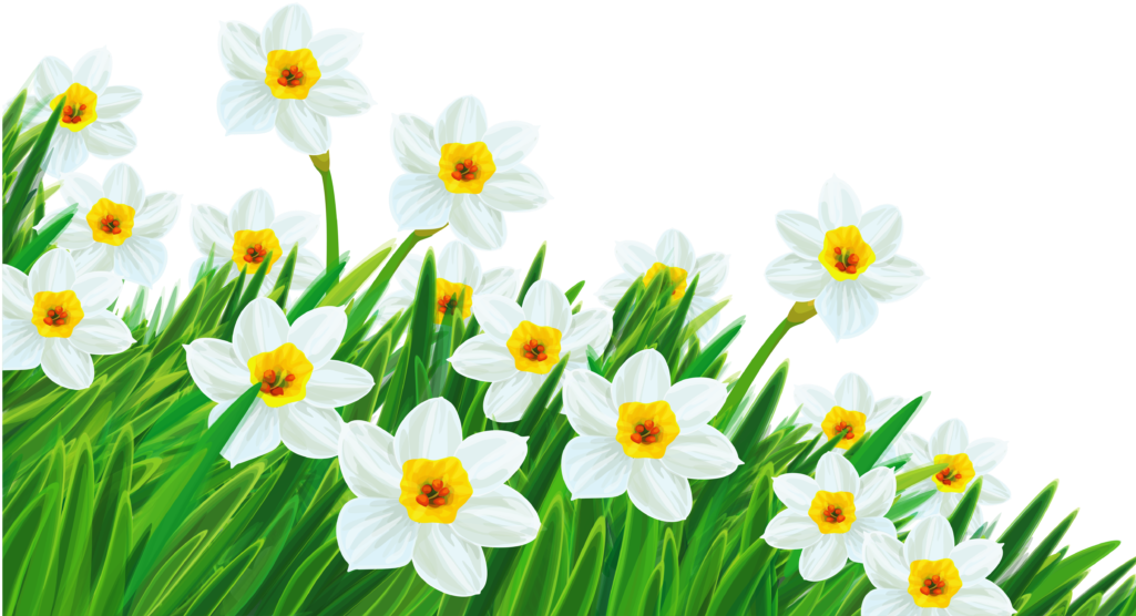 Free spring background clipart clip art library library Daffodil Clipart Spring Break 2 Clip Art Free - Transparent ... clip art library library