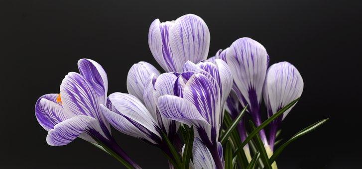Free spring flowers photos vector transparent stock Spring, Flowers - Free images on Pixabay vector transparent stock
