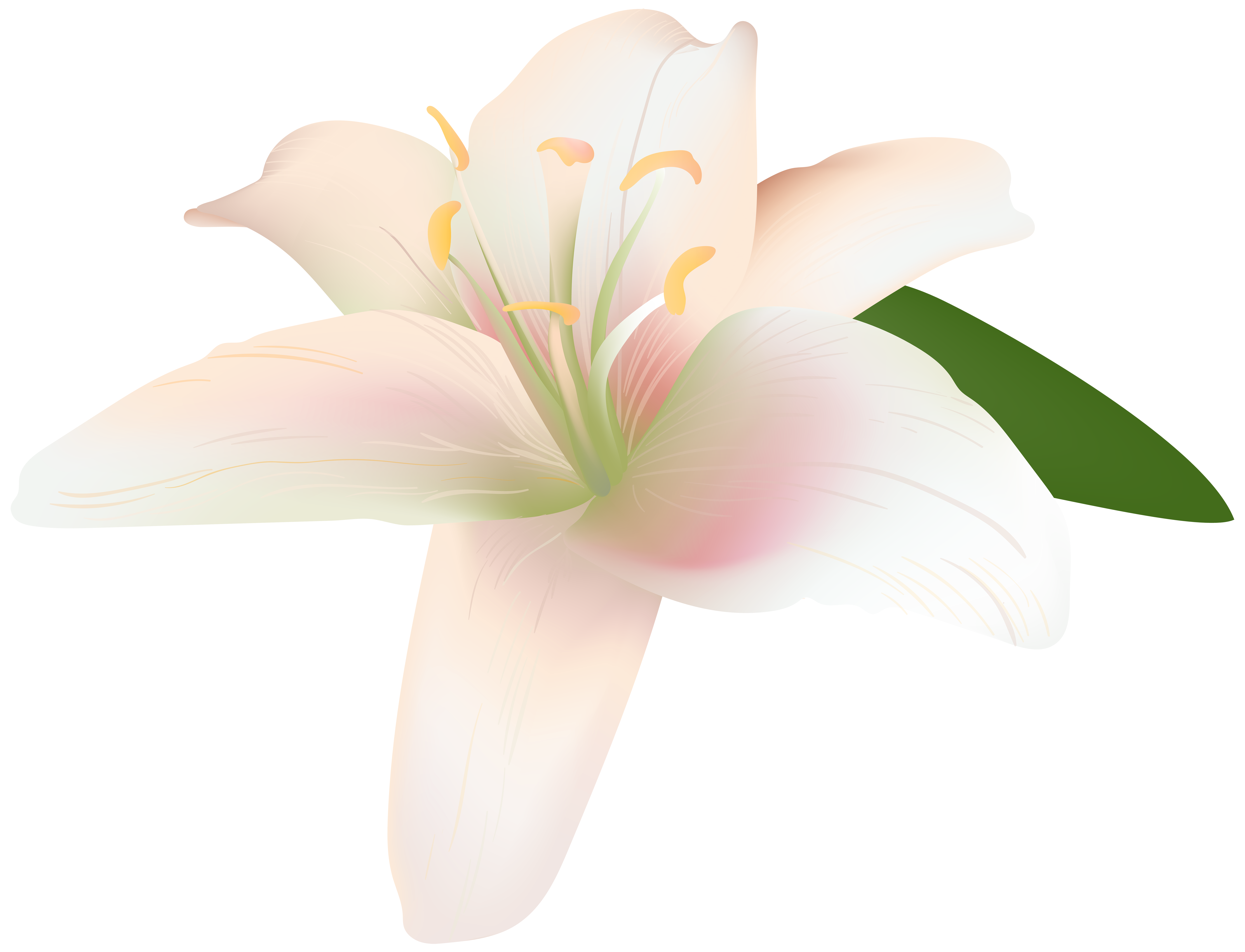 Star lily flower black and white clipart black and white library Lily Flower Transparent Clip Art Image | Gallery Yopriceville ... black and white library