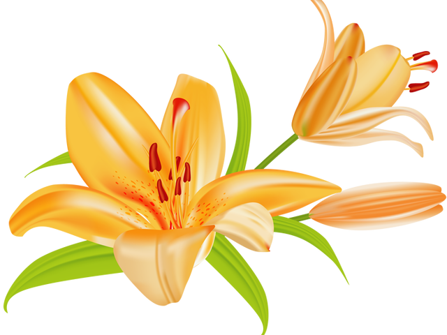 Free star lily clipart banner library Calla Lily Clipart Free Download Clip Art - carwad.net banner library