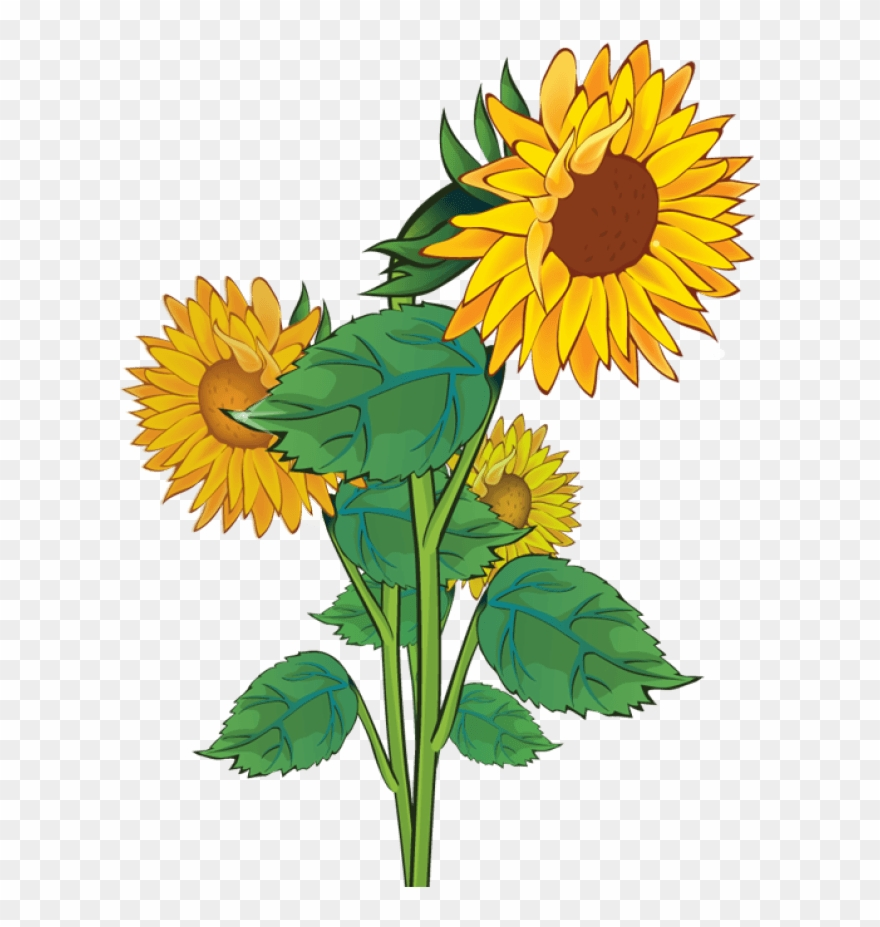 Is clipart public domain clip freeuse download Free Sunflower Clipart Public Domain Flower Clip Art - Plants ... clip freeuse download