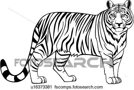 Free tiger clipart black and white clip art download Tiger Clipart Black And White Free | Free download best Tiger ... clip art download